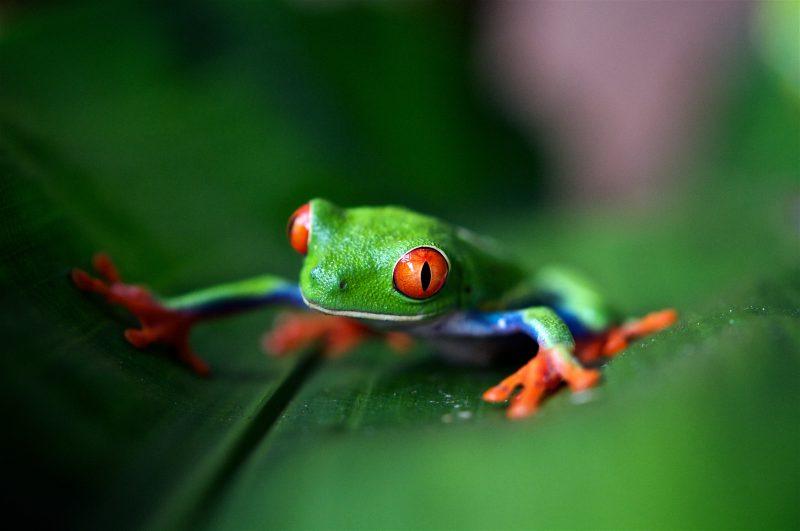 Trasferirsi in Costa Rica per conoscere bellezze faunistiche