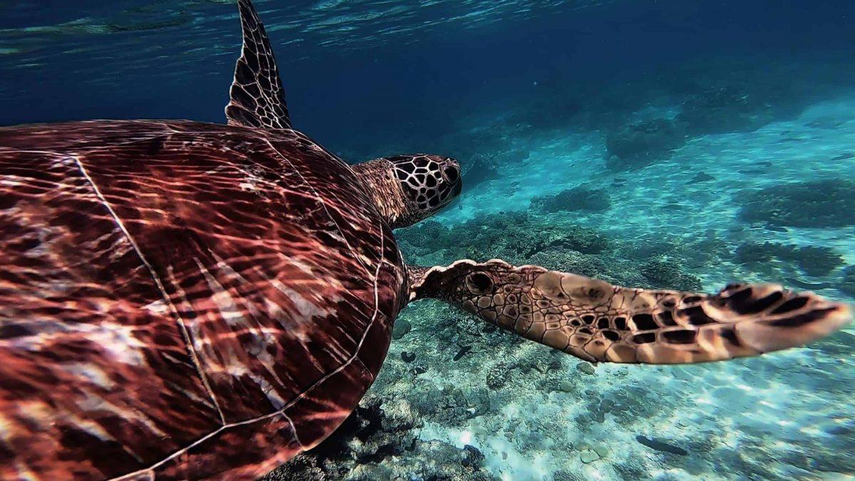 Trasferirsi nelle Filippine per fare snorkeling