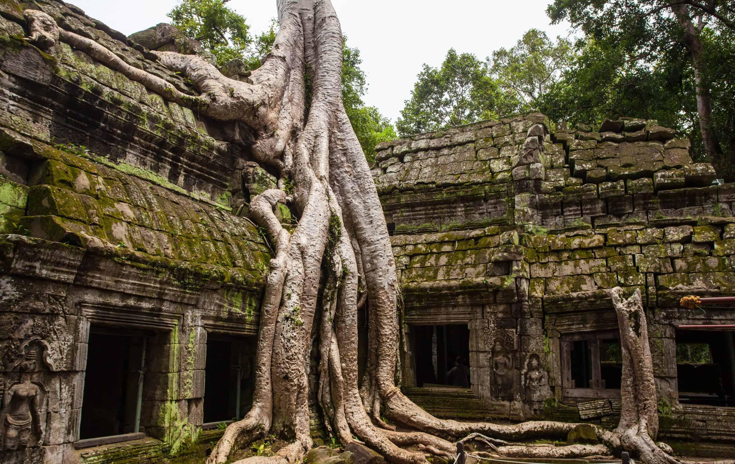 Tree in the Ta Prohm Temple